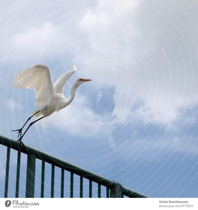 700 Kein Grund abzuheben Ferien & Urlaub & Reisen Tourismus Ausflug Sommer Sommerurlaub Brücke Terrasse Geländer Tier Nutztier Vogel Flügel Reiher Seidenreiher