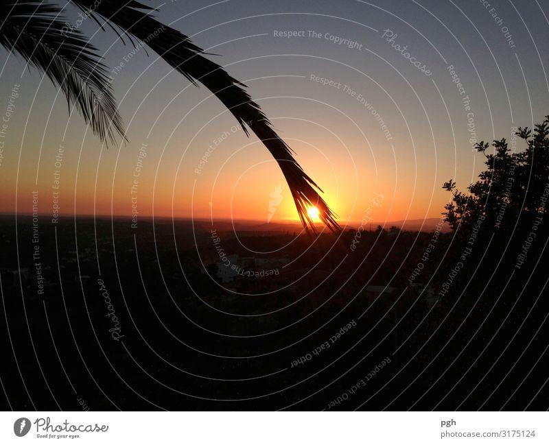 Palme streichelt Sonne im Süden Glück Ferien & Urlaub & Reisen Tourismus Ferne Sommer Sommerurlaub Strand Meer Umwelt Natur Landschaft Wolkenloser Himmel