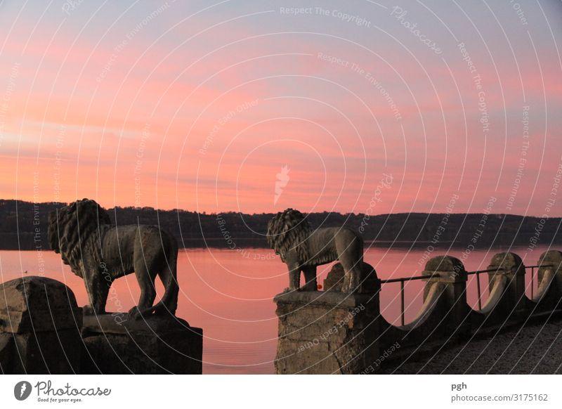 Löwen bei Sonnenuntergang am Starnberger See Ausflug Sightseeing Sommer wandern Fahrrad Feierabend Wasser Sonnenaufgang Seeufer Bootsfahrt Dampfschiff Wildtier