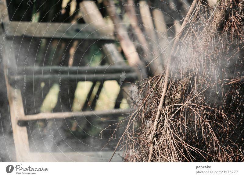 klimawandel | brandgefährlich Außenaufnahme Waldbrand Feuer Rauch Farbfoto Brand Klimawandel Baum brennen Natur Trockenheit Gefahr Tod bedrohlich Holz Leiter
