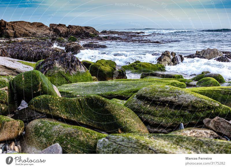 Felsen an der Atlantikküste Umwelt Natur Landschaft Wasser Himmel Wolkenloser Himmel Horizont Herbst Wellen Küste Nordsee Stein blau braun grün Einsamkeit