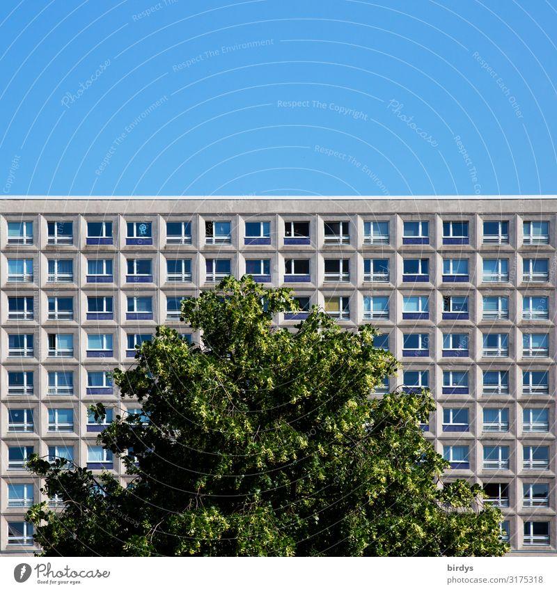 urbanes Grün Häusliches Leben Wohnung Wolkenloser Himmel Sommer Schönes Wetter Baum Baumkrone Berlin Stadt Hauptstadt Stadtzentrum Menschenleer Haus Hochhaus
