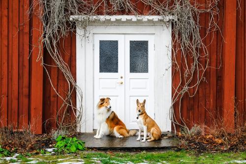 Zwei Gauner Hund Tier Glück Zusammensein Freundschaft Zufriedenheit sitzen Fröhlichkeit Freundlichkeit Neugier Schutz Sicherheit Team Haustier Vertrauen