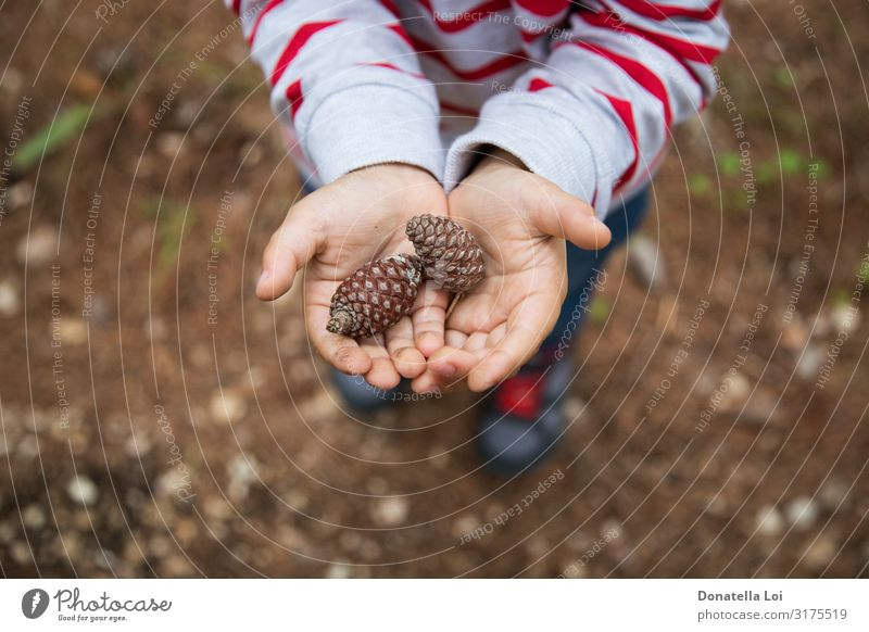Kind hält Kiefernzapfen in den Händen Lifestyle Dekoration & Verzierung Bildung Mensch Kleinkind Junge Kindheit Hand 1 1-3 Jahre Natur Wald Hemd Streifen
