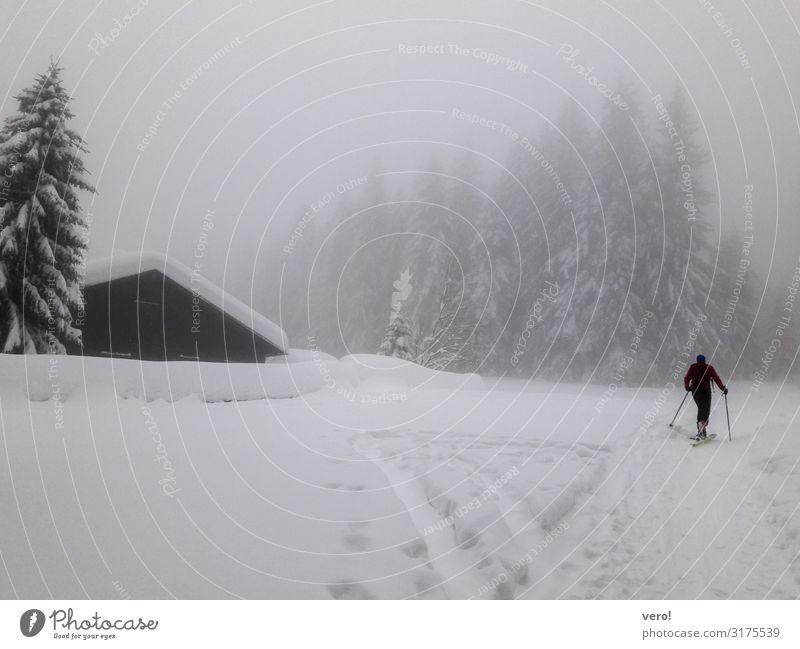 Der erste Schnee sportlich Winter Berge u. Gebirge Skitour Mann Erwachsene 1 Mensch Wald Alpen Bewegung Fitness gehen genießen dunkel Gesundheit gigantisch