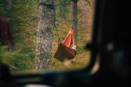 just sneaking upon trees and leaves Freizeit & Hobby Ferien & Urlaub & Reisen Tourismus Ausflug Abenteuer Freiheit Camping Wald Zufriedenheit Einsamkeit