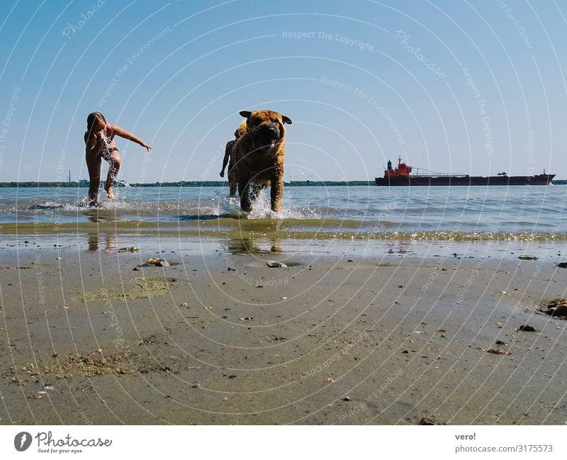 Spaß im Nass Freizeit & Hobby Sommerurlaub Mädchen Wasser Wolkenloser Himmel Flussufer Hund 1 Tier Sand Schwimmen & Baden genießen rennen toben Fröhlichkeit