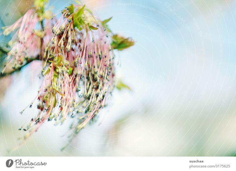 früüühling Frühling frisch neu Neuanfang Blüte Natur Pflanze Wachstum hell Freundlichkeit Hoffnung Wellness Baum Himmel Schwache Tiefenschärfe Jahreszeiten