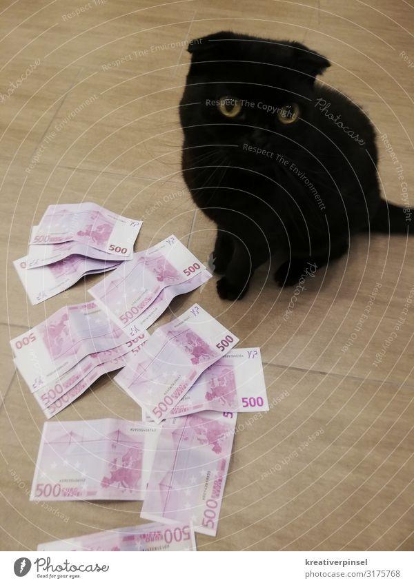 Alles meins Katze Tier schwarz Glück rosa träumen elegant sitzen Erfolg authentisch verrückt niedlich beobachten Coolness Geld Macht