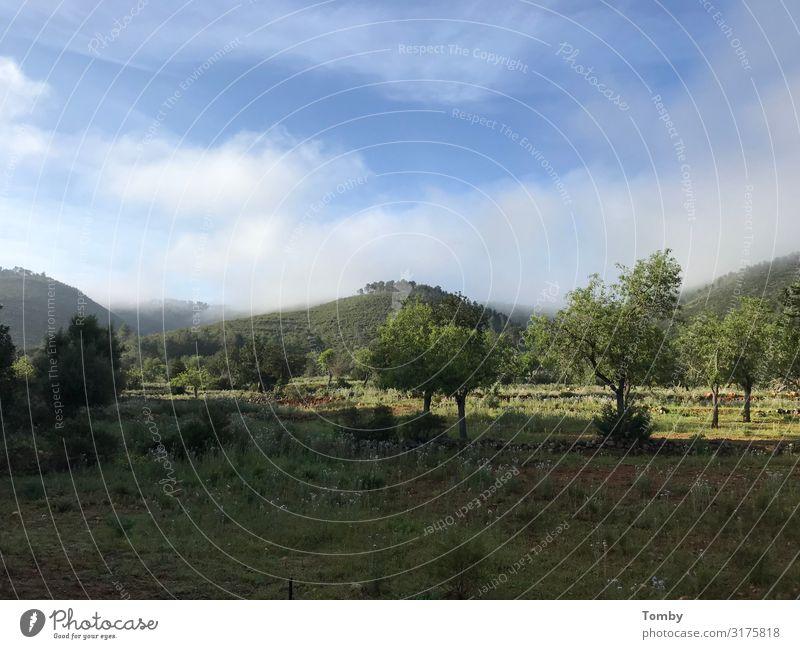 Landschaft Ibiza Ferien & Urlaub & Reisen Sommer Sommerurlaub Sonne Insel Berge u. Gebirge Umwelt Natur Pflanze Tier Baum Sträucher Hügel Freiheit Frieden Ferne