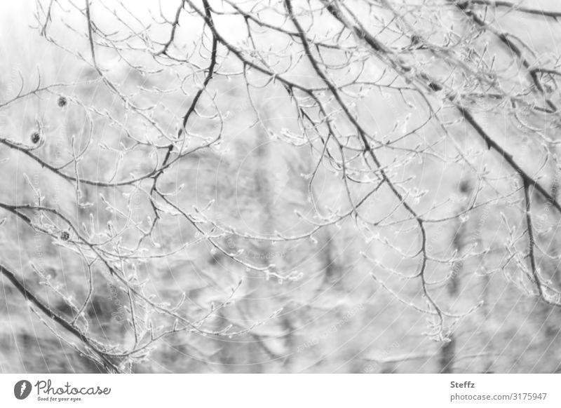 Im Winterwald Umwelt Natur Landschaft Klima Wetter Eis Frost Schnee Pflanze Zweig Ast Zweige u. Äste Wald Schneelandschaft Deutschland Europa frieren kalt