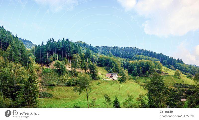 Landschaft im Schwarzwald Ferien & Urlaub & Reisen Tourismus Ausflug Sommer Natur Schönes Wetter Berge u. Gebirge Menschenleer Tradition Europa