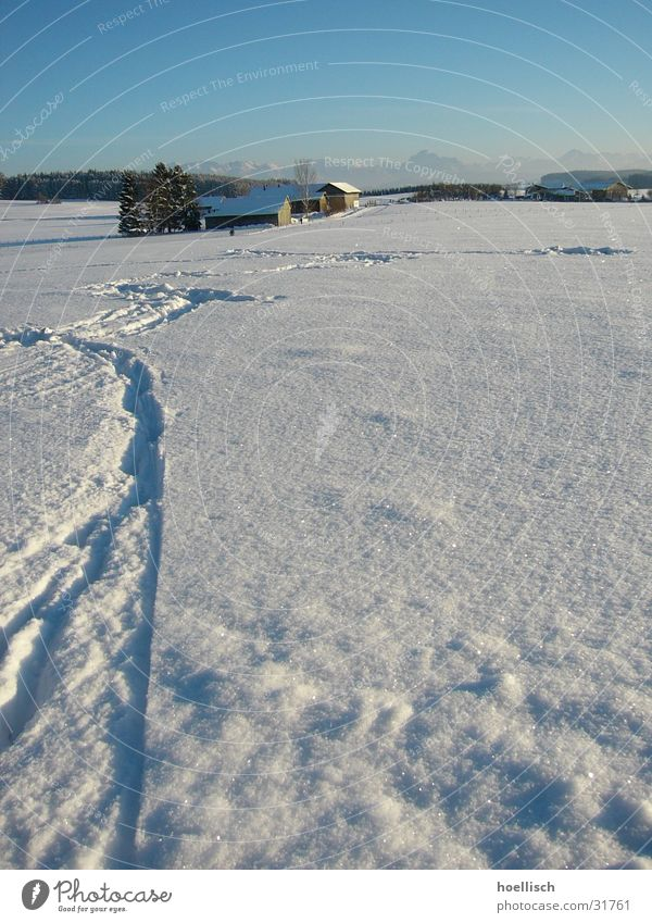 Winterimpression Baum Haus Fußspur Allgäu Hügel Spuren Berge u. Gebirge Schnee Sonne Himmel Alpen