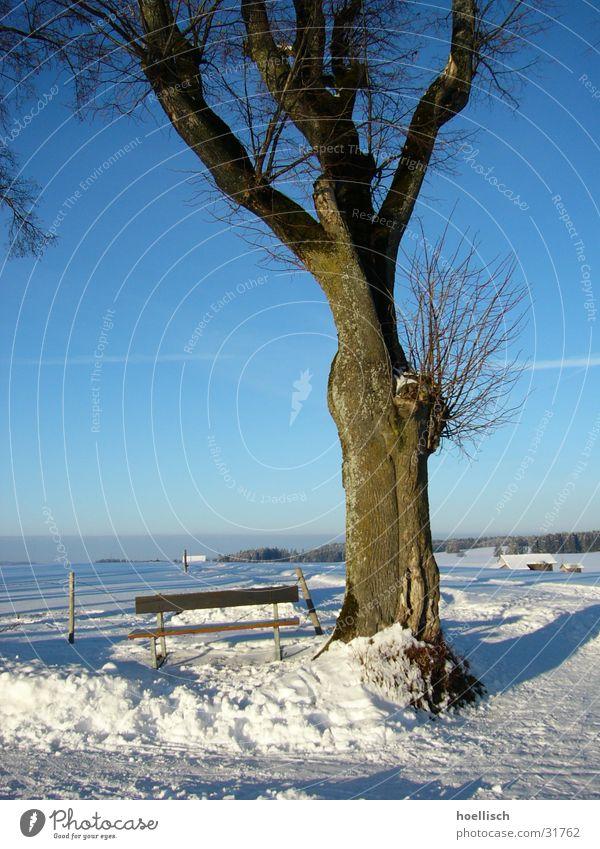 Winterimpression Baum eigenwillig Birke Zaun Haus Allgäu Berge u. Gebirge Bank Schnee Knoten alt Hütte Sonne Himmel