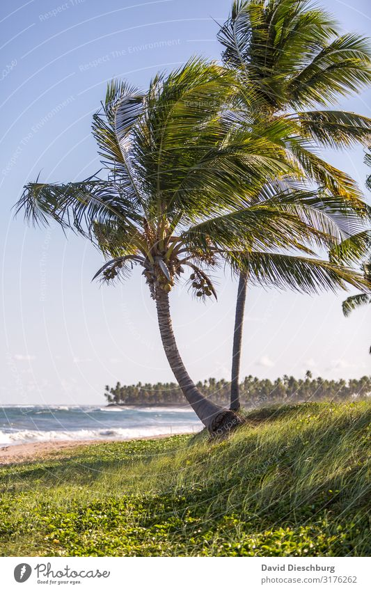 Palmenstrand Ferien & Urlaub & Reisen Tourismus Abenteuer Ferne Sommerurlaub Natur Landschaft Pflanze Tier Wolkenloser Himmel Frühling Schönes Wetter Wellen