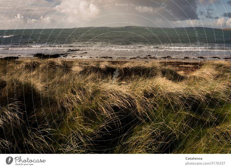 Dünengras Strand Meer Winter wandern Umwelt Natur Landschaft Pflanze Himmel Wolken Horizont Gras Hügel Wellen Atlantik St Georg Kanal Brandung dehydrieren