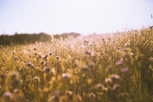 Abschied und Willkommen Natur Pflanze Landschaft ruhig Freude Gesundheit Leben Wärme gelb Umwelt Blüte Wiese Glück orange frei Fröhlichkeit