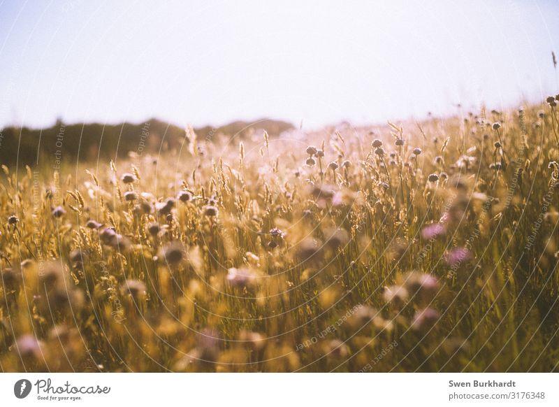 Abschied und Willkommen Umwelt Natur Landschaft Pflanze Urelemente Blüte Wildpflanze Wiese Hügel Duft frei Wärme gelb orange Freude Glück Fröhlichkeit