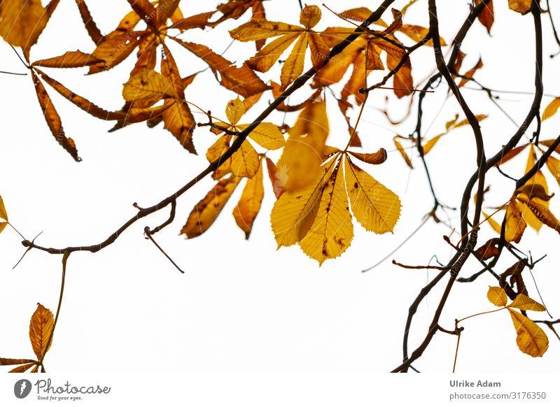 Herbstliches Planten un Blomen Natur Pflanze Baum Blatt Kastanienblatt Herbstlaub Park Hamburg Planten un Blomen - Park Sehenswürdigkeit Garten leuchten