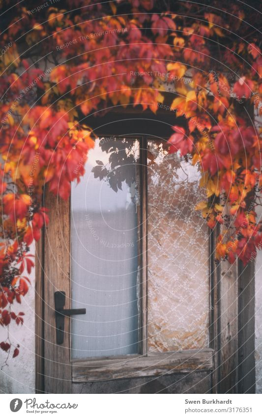 Zugang gestattet Häusliches Leben Haus Garten Umwelt Natur Herbst Klima Klimawandel Schönes Wetter Pflanze Baum Blatt Bauwerk Gebäude Architektur Mauer Wand