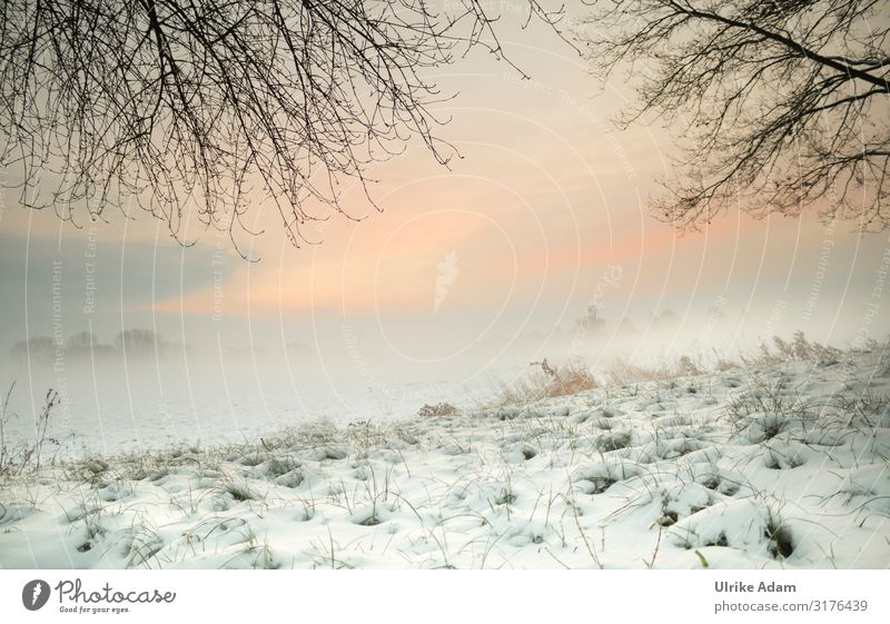 Sonnenaufgang im Winter Himmel Ferien & Urlaub & Reisen Natur Weihnachten & Advent Landschaft Umwelt Schnee Gras Stimmung Design Zufriedenheit Eis Nebel
