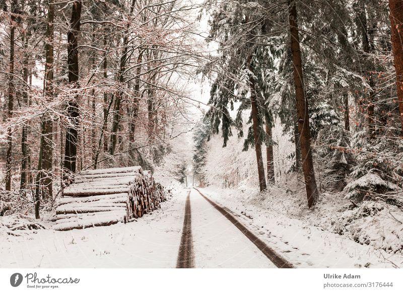 Schneelandschaft Wald Ferien & Urlaub & Reisen Natur Weihnachten & Advent Landschaft Baum Winter kalt Wege & Pfade Stimmung wandern Eis Idylle Romantik Klima