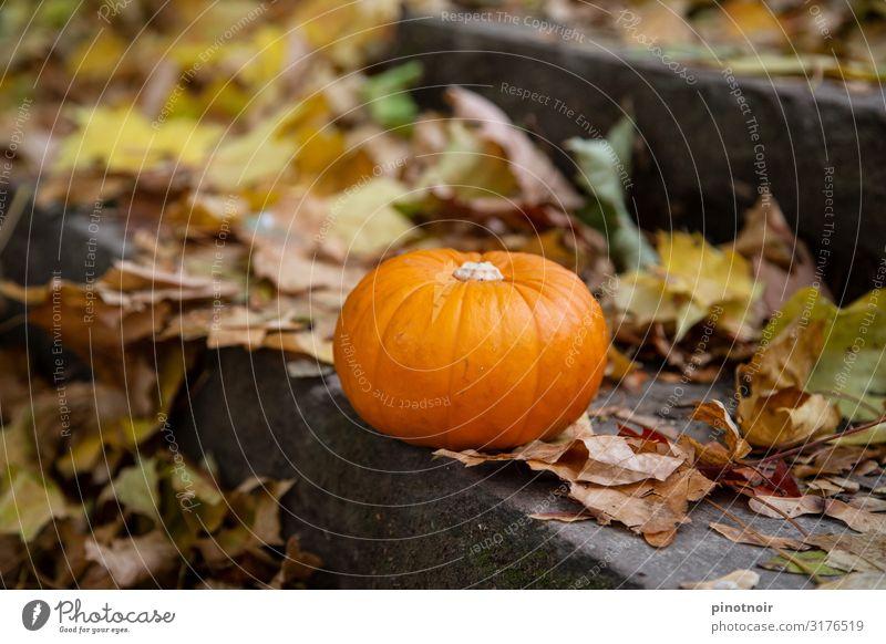 Kürbis im Herbst Lebensmittel Gemüse Garten Erntedankfest Halloween Park liegen dehydrieren klein natürlich rund braun gelb orange Stimmung Umwelt Kürbiszeit
