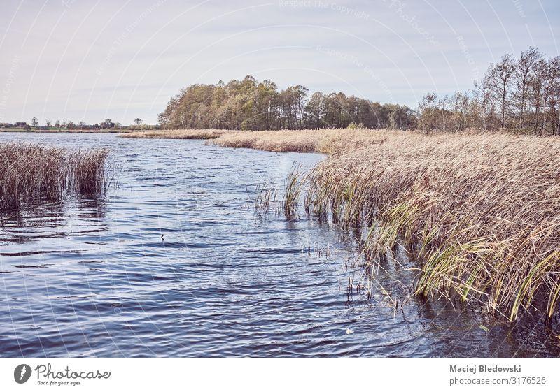 Retro getontes Bild eines Sees im Herbst Natur Landschaft Himmel Gras Seeufer Flussufer Teich retro Erholung Ferien & Urlaub & Reisen Gelassenheit Idylle Wasser