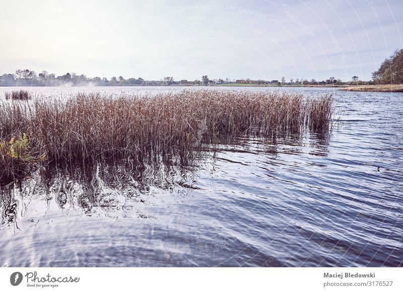 Retro-getontes Bild eines Sees. Natur Landschaft Himmel Herbst Gras Seeufer Flussufer Erholung Frieden Horizont Idylle Ferien & Urlaub & Reisen Wasser