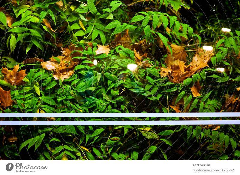 Bushaltestelle im Querformat Abend Berlin dunkel Gebäude geheimnisvoll Haus Nacht Neukölln Stadt Stadtleben Fensterscheibe Glas Glasscheibe Blatt grün Hecke