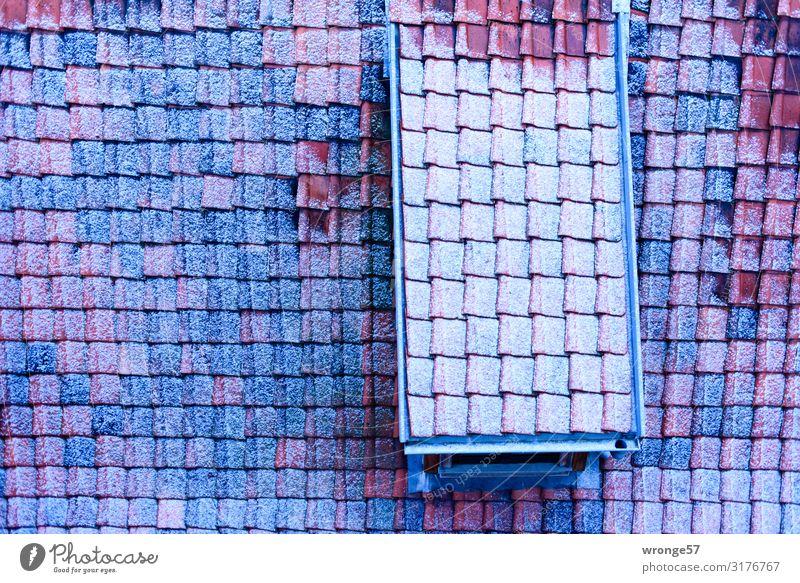 Winterliches Dach Quedlinburg Kleinstadt Stadtzentrum Menschenleer Haus Einfamilienhaus kalt blau braun weiß Dachziegel Frost Eis Raureif Nahaufnahme Querformat