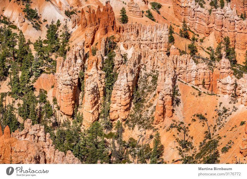 Hoodoo-Formation im Bryce Canyon Nationalpark, Utah Ferien & Urlaub & Reisen Berge u. Gebirge Natur Landschaft Himmel Park Felsen Schlucht Denkmal Stein gold