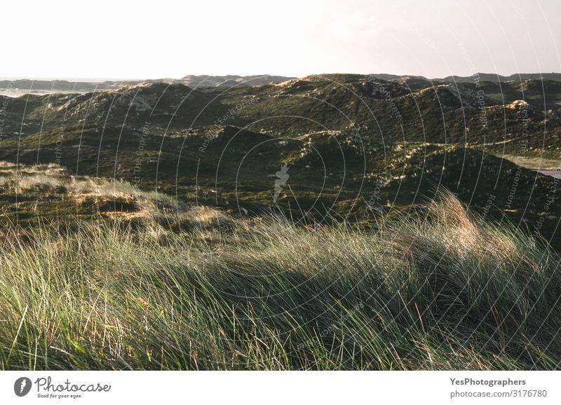 Dünenlandschaft mit Moos und Gras am Vormittag auf der Insel Sylt Ferien & Urlaub & Reisen Sommer Sommerurlaub Natur Landschaft Klimawandel Schönes Wetter Hügel