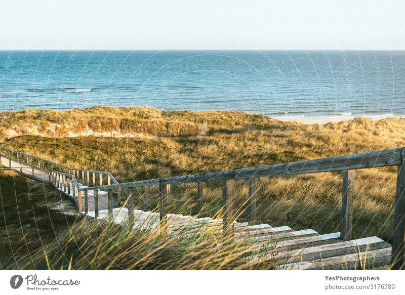Holztreppe durch Dünen und Gras auf der Insel Sylt zum Meer Ferien & Urlaub & Reisen Sommer Sommerurlaub Strand Landschaft Sand Sonnenlicht Moos Küste Nordsee
