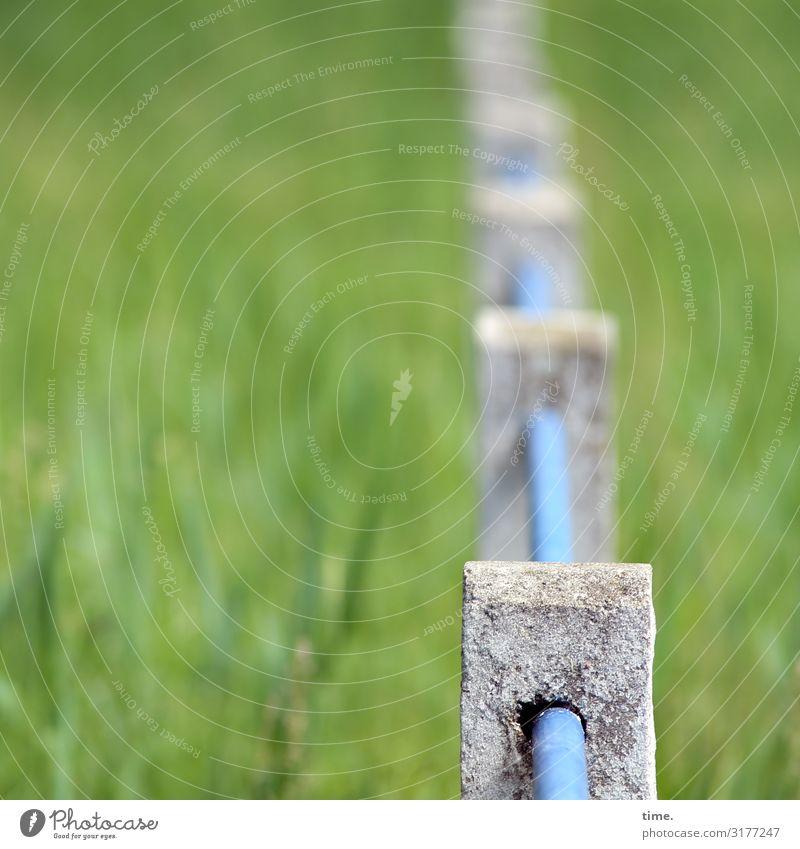 Geschichten vom Zaun (V) grün Wiese Design hell Linie Metall Kommunizieren Ordnung Schilder & Markierungen Perspektive Schönes Wetter historisch Beton