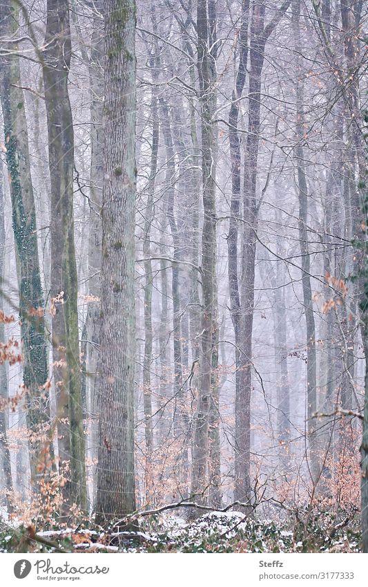 Winter im Wald Umwelt Natur Landschaft Klima Eis Frost Schnee Baum Winterwald Deutschland Europa frieren kalt natürlich schön grau weiß Winterstimmung