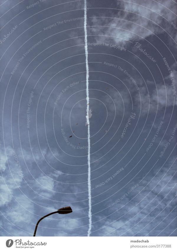 Wettlauf Stil Himmel Luftverkehr Flugzeug Kondensstreifen Tier Vogel Schwarm fliegen authentisch blau bizarr Rakete vertikal Streifen Linie Straßenbeleuchtung
