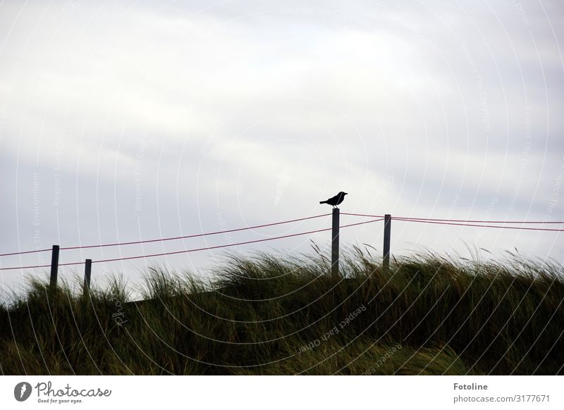 Düne Himmel Natur Pflanze grün weiß Landschaft Wolken Tier Ferne Strand schwarz Umwelt natürlich Küste Gras klein