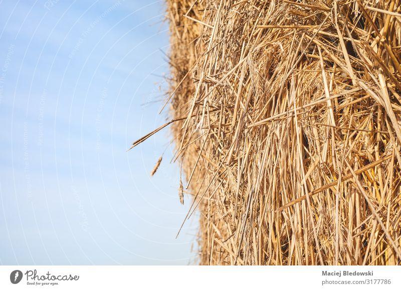 Nahaufnahme eines Heuhaufens gegen den Himmel. Natur Nutzpflanze gelb gold Heugarben Tierfutter Ackerbau Bauernhof Hintergrund Ernte ländlich Stroh Feldfrüchte