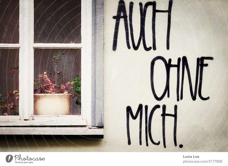 Auch ohne mich Pflanze Topfpflanze Mauer Wand Fassade Fenster Graffiti trashig Traurigkeit Gedeckte Farben Außenaufnahme Textfreiraum rechts Abend Dämmerung