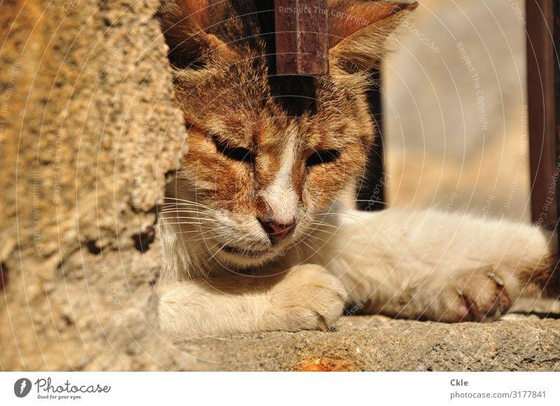 Not dark yet Katze weiß Erholung Tier Einsamkeit Umwelt Traurigkeit Stein orange braun Treppe Metall träumen Wildtier Haustier Fell