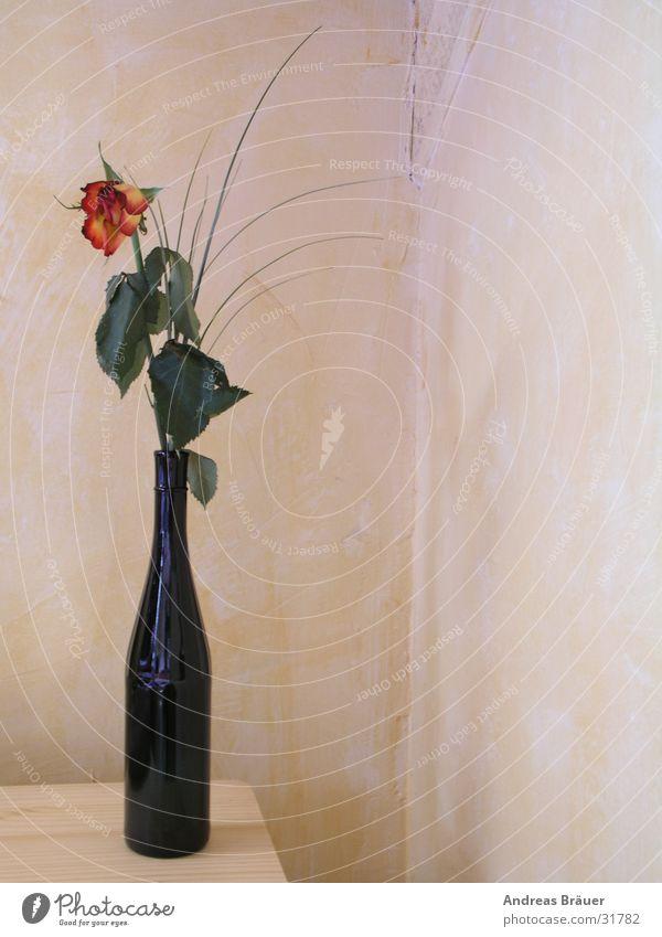 Im Namen der Rose rot gelb Blume Weinflasche grün ruhig Einsamkeit Erinnerung Souvenir Romantik Häusliches Leben Flasche blau Dekoramtion Blumendeko