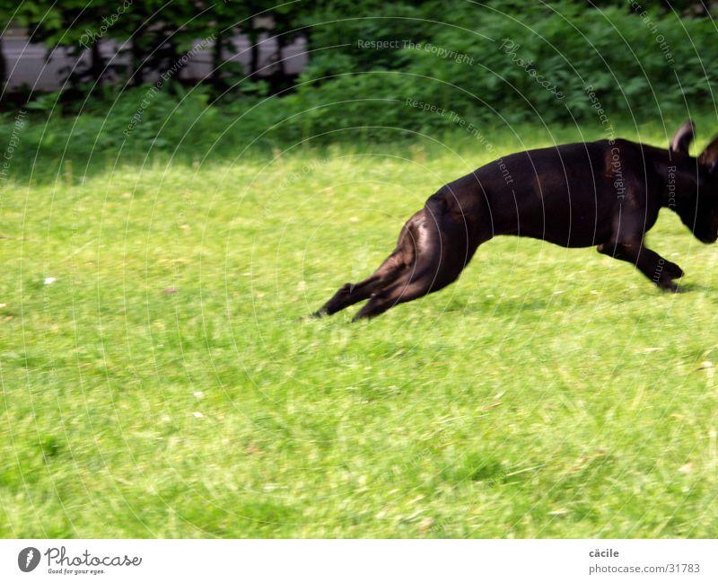 run thyson run Hund Geschwindigkeit grün rennen Fun ohne Face Elektrizität
