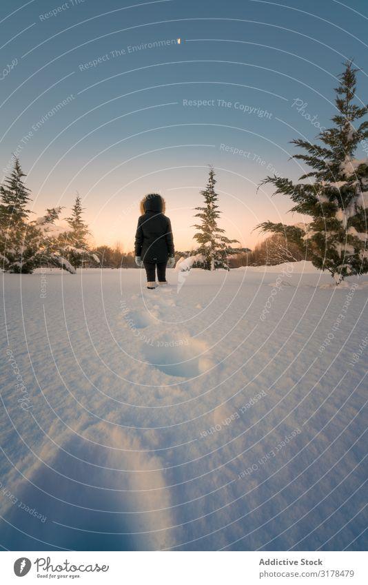 Reisender, der auf Schnee um Nadelbäume herum läuft. laufen Konifere Baum Himmel Frau Silhouette malerisch Gelände Tanne Winter kalt Natur Lifestyle Landschaft