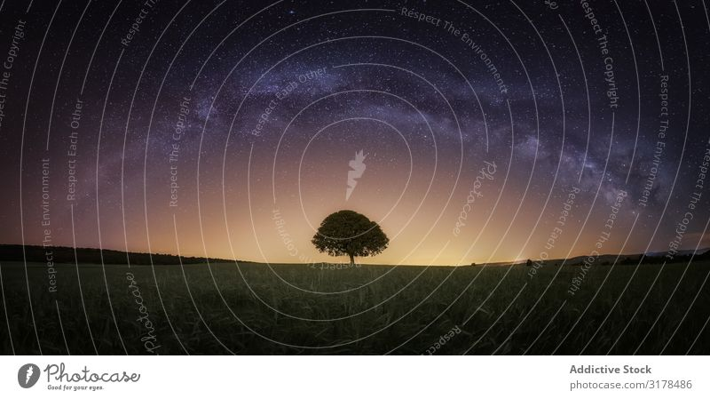 Trockener Baum im hohen Gras unter Sternenhimmel sternenklar Himmel Landschaft Nacht regenarm Schmuckkörbchen Erde dunkel unverhüllt wild Holz Galaxie Natur