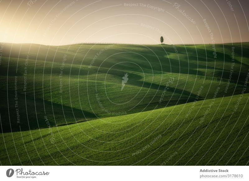 Wunderschöne leere grüne Felder Panorama (Bildformat) Toskana Mittelgebirge Italien Unendlichkeit Gras Hügel Landschaft Natur Länder Jahreszeiten Sommer Wiese