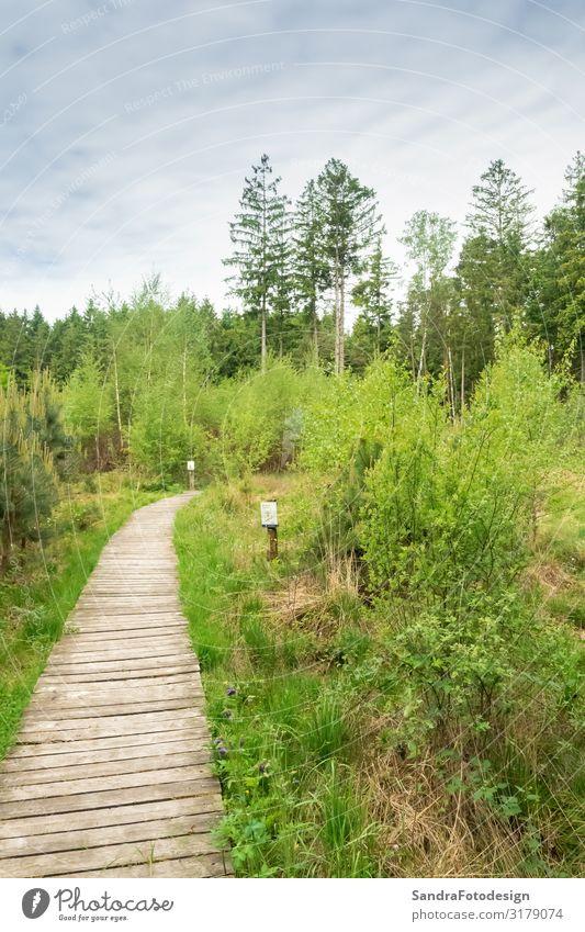 Impressions from the Moorpark in Bad Feilnbach, Bavaria Freizeit & Hobby Ferien & Urlaub & Reisen Ausflug Sommer wandern Natur Pflanze Sträucher Park Wald Sumpf