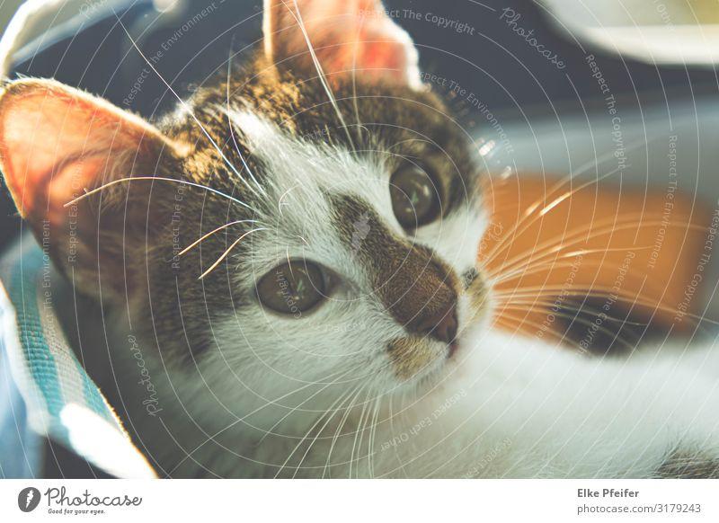 Kater im 7. Himmel Tier Haustier Katze 1 Tierjunges schlafen Freundlichkeit Fröhlichkeit Gefühle Stimmung Geborgenheit Warmherzigkeit Sympathie Liebe Erholung