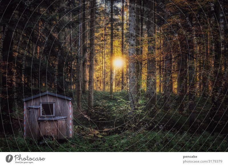 zentrale Natur Landschaft Sonne Baum Erholung Wald Leben Herbst Wärme Religion & Glaube Gefühle Zufriedenheit Kraft Ordnung Schönes Wetter geheimnisvoll