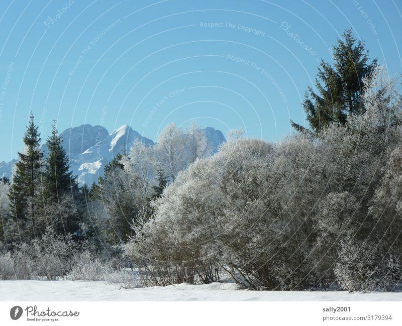 Winterwald... Wolkenloser Himmel Eis Frost Baum Wald Alpen Berge u. Gebirge ästhetisch kalt Einsamkeit Gelassenheit Natur Schnee Raureif weiß Farbfoto